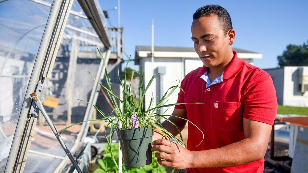 Sayed holding plant