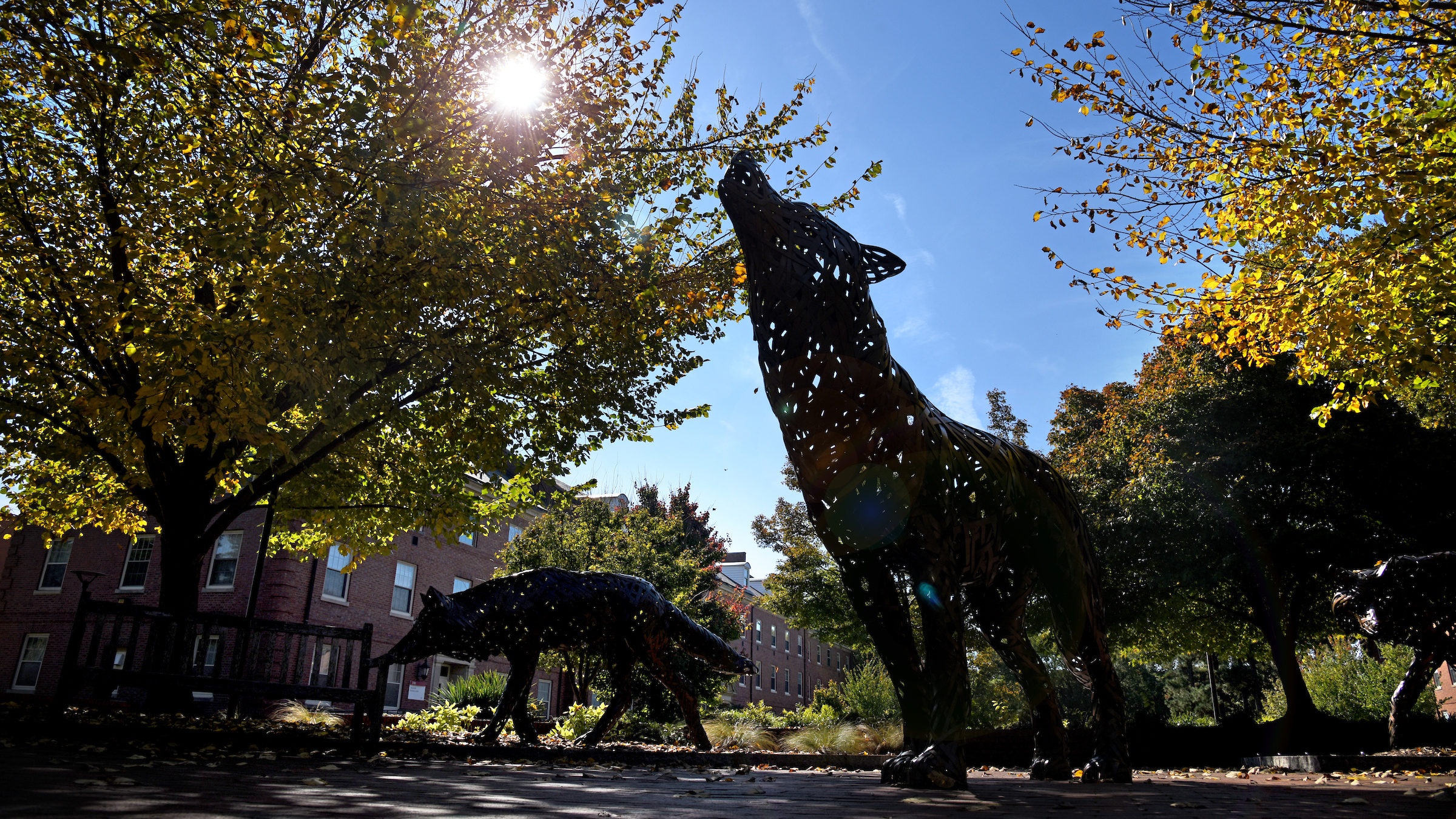 Howling wolf statues on campus