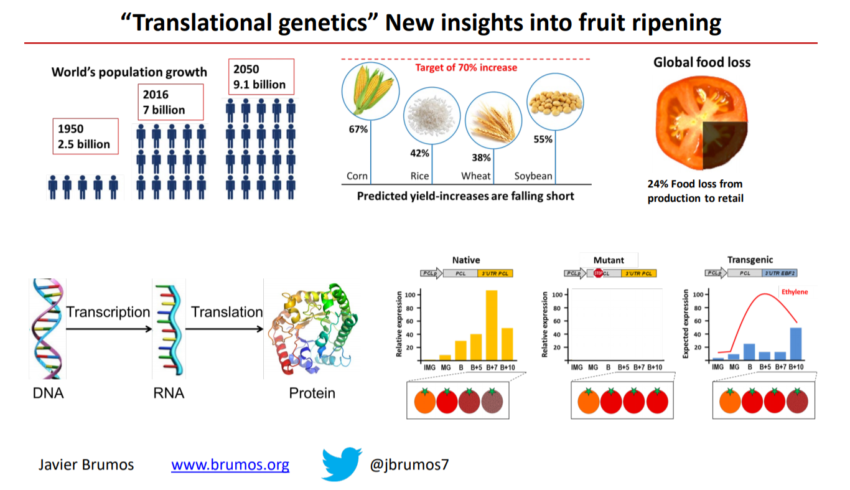 Translational Genetics Research Overview