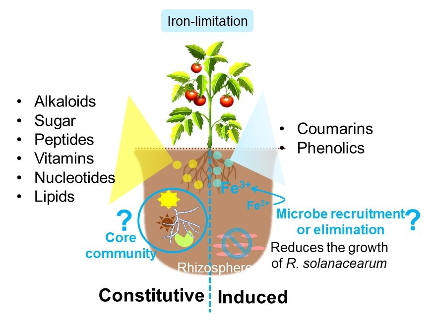 Studying Plant-Microbe Interactions